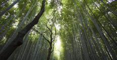 """Fritjof Capra: """"Podemos e devemos aprender muito com a natureza"""""""