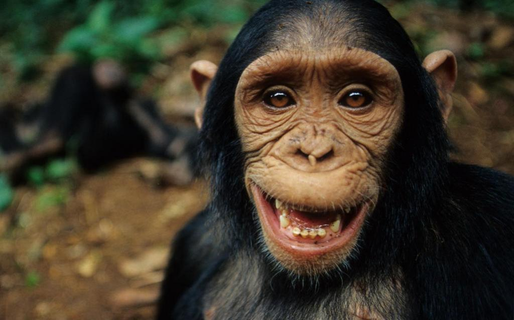 Leis, regulações, educação etc são ferramentas para que o ser humano ultrapasse a diretriz moral que compartilha com chimpanzés.
